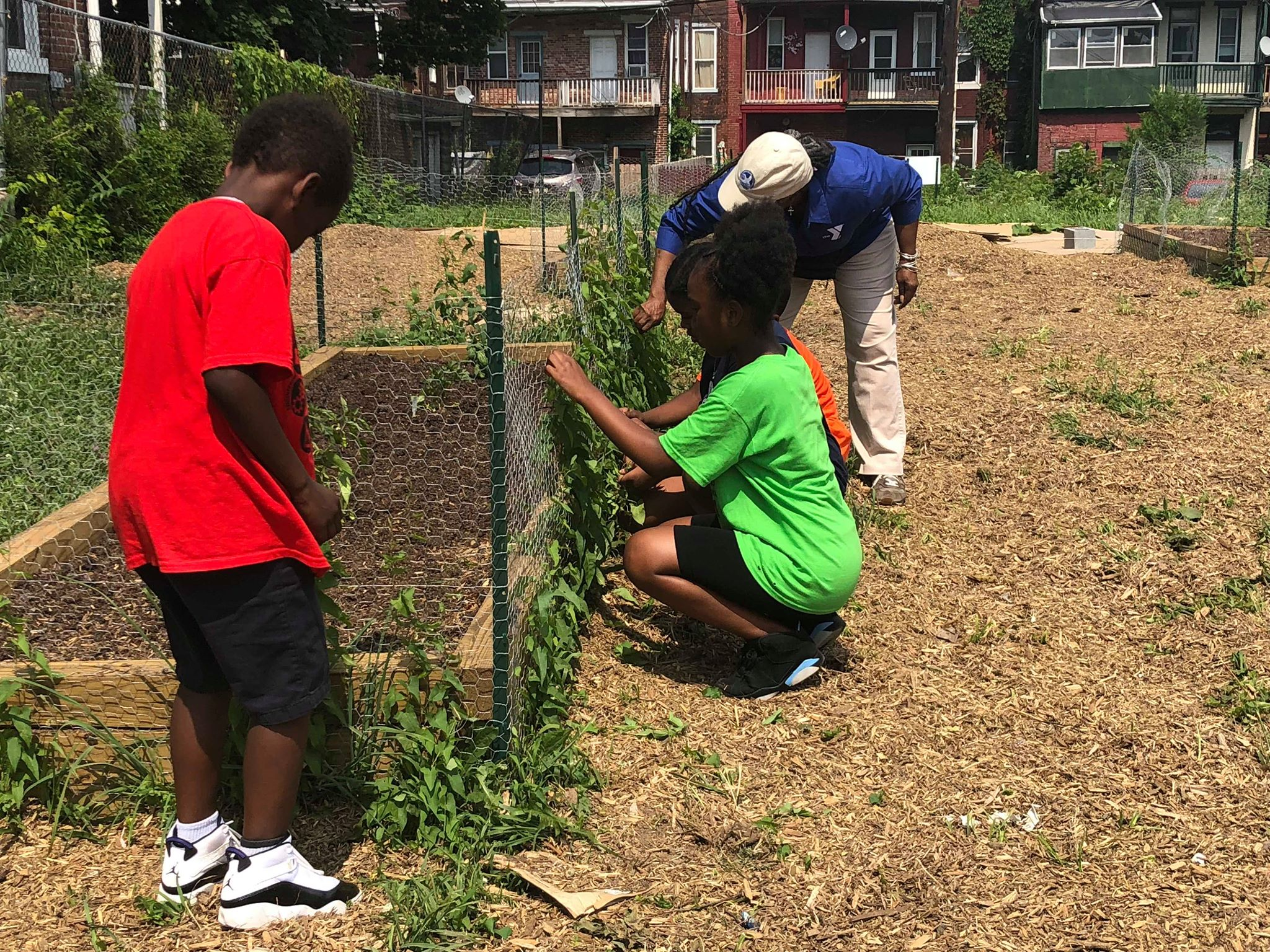 A Garden Grows: Veggies, learning take root at Camp Curtin Y. - theBurg